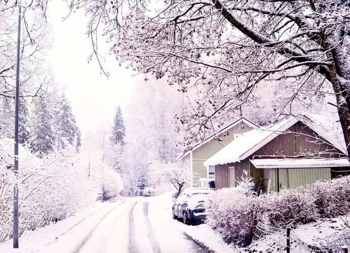 la neve sui rami foto di copertina