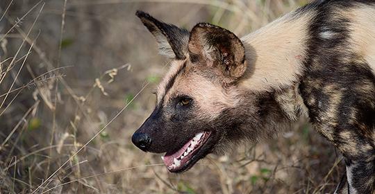 Tanzania safari- Selous