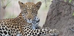 Afrika reizen Zuid Afrika