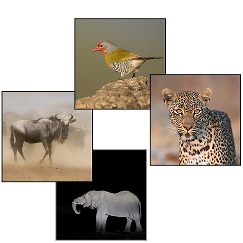 Afrika reizen- fotografie