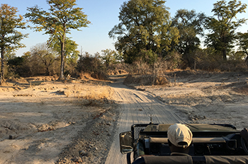 Botswana safaris - lodges