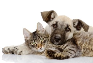 Dog cat iStock_000025076373Large