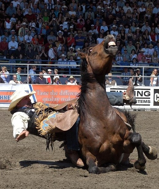 Calgary Stampede Sends Young Horses To Slaughter