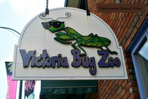 Are you or your kids bug lovers? Make sure to visit the Bug Zoo in Victoria while on Vancouver Island.