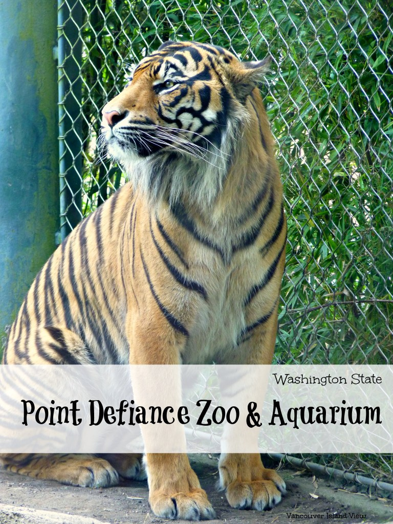 Looking for something to do in the Pacific Northwest? A must see attraction in Washington State is the Point Defiance Zoo and Aquarium.