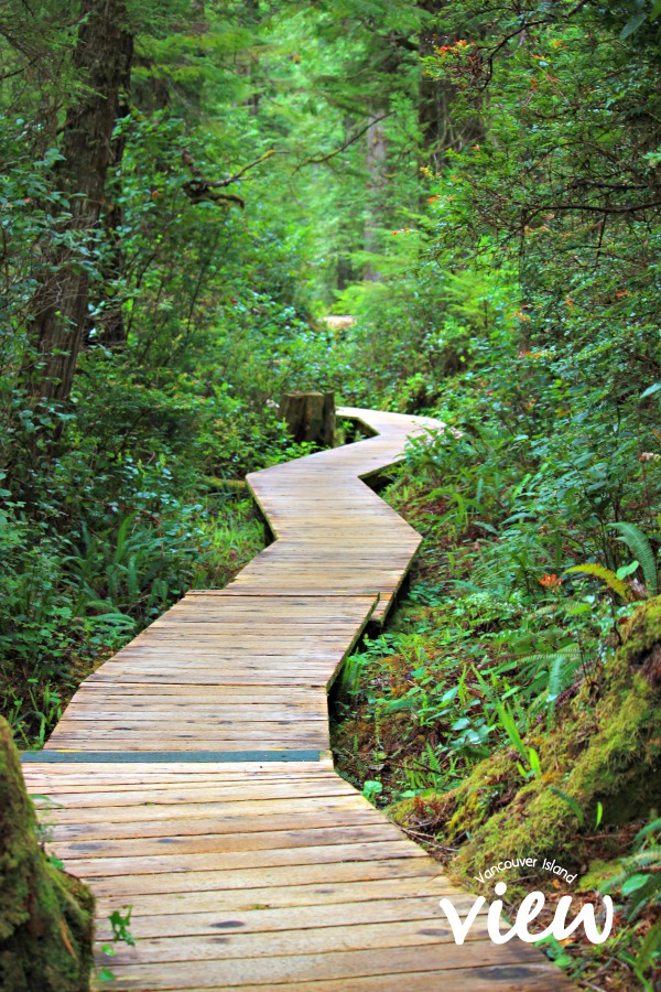 Boardwalk at Hot Springs Cove.. Hot Springs Cove is a tour destination you should not miss while in Tofino on Vancouver Island
