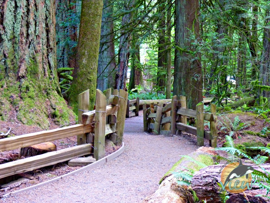 Cathedral Grove - one of the many things to see and do while on route from Nanaimo to Tofino.