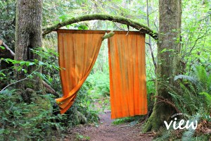 Wacky Woods - one of the many hidden gems found on Vancouver Island