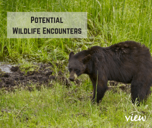 Potential Wildlife Encounters on Vancouver Island