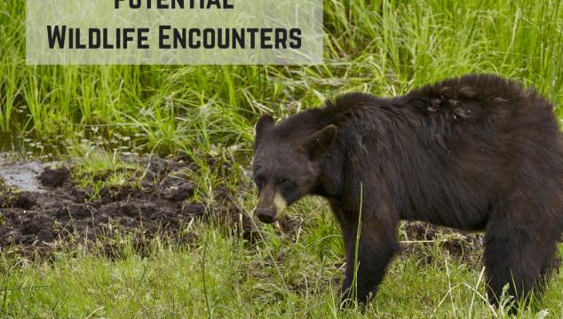 Potential Wildlife Encounters on Vancouver Island