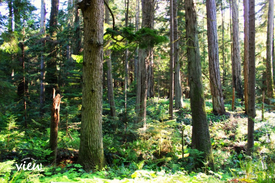 The Heritage Forest in Qualicum Beach is one of the top ten incredible wonders of the Oceanside area.