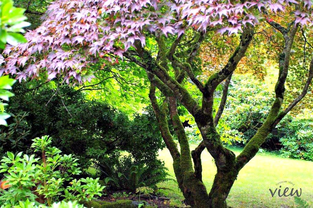 Milner Gardens is one of the top ten natural wonders of the Oceanside area.
