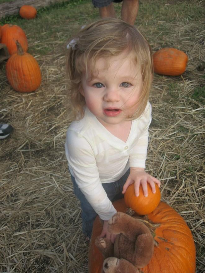 Westham Island pumpkin patch