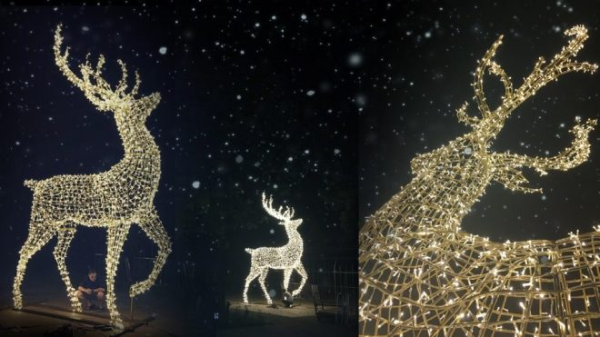 deer-christmas-lights-shineenchant
