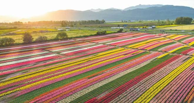 spring family outing - tulip festival