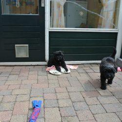 pups buiten.