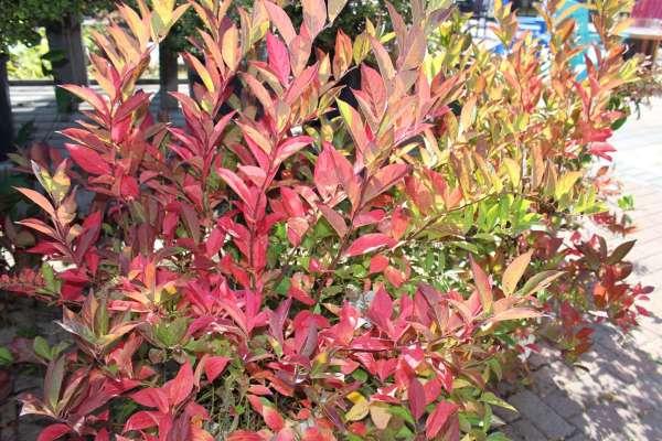 shrubs and bushes in appleton