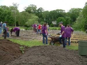 Goldman Sachs volunteers at work in the Vanderbilt's organic vegetable garden