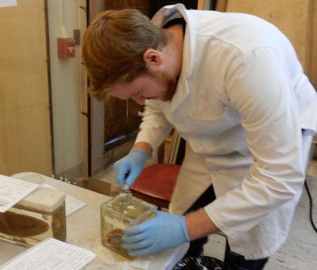 Vanderbilt Museum: Vanderbilt Begins Restoration Of Marine Life Collection