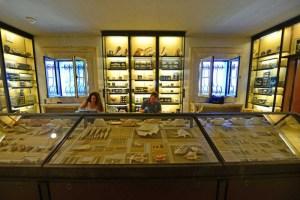 Newsday photo by Thomas A. Ferrara Amanda Jensen and Brandon Williams restore Vanderbilt marine specimens