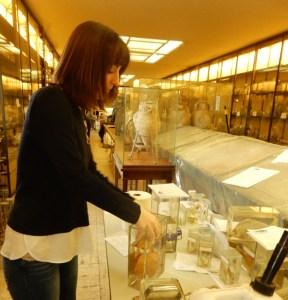 Amanda Jensen of the Vanderbilt curatorial staff conducts conservation work on a marine specimen Vanderbilt Museum photo