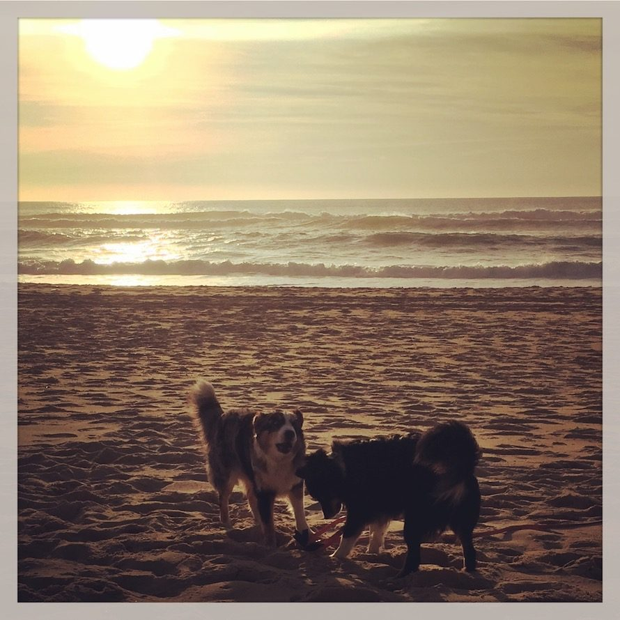 Hund camping Atlantik Frankreich Aquitanien