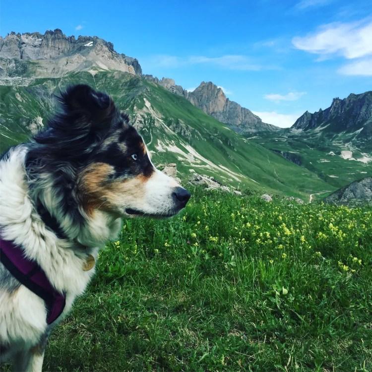 Hund Frankreich Alpen Rundreise camping Col du Galibier
