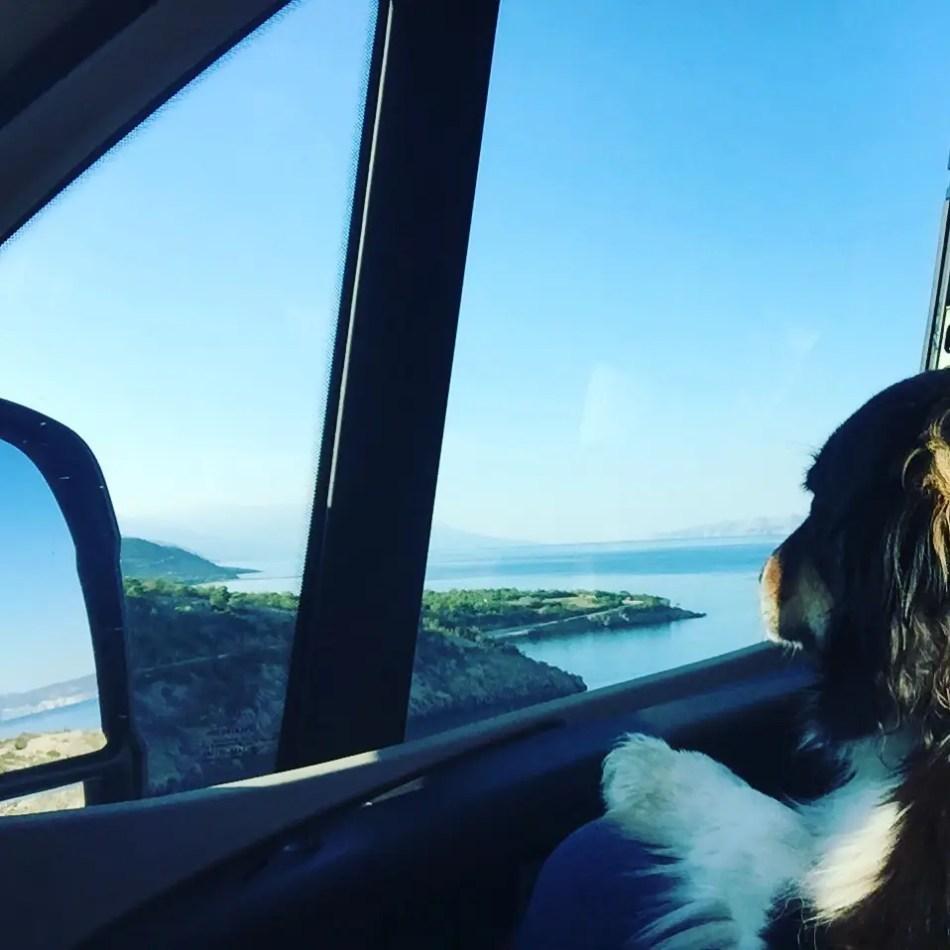Reisen mit Hund Camping mit Hund Wohnmobil Australian Shepherd