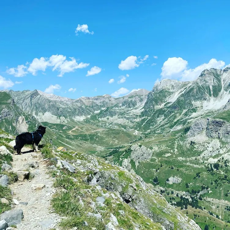 Wandern mit Hund Valle Maira Dino Icardi Australian Shepherd