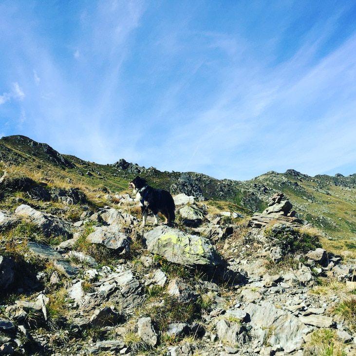 Pallspitze Kelchsau Brixental Kitzbüheler Alpen Wanderung mit Hund Roadtrip Camping