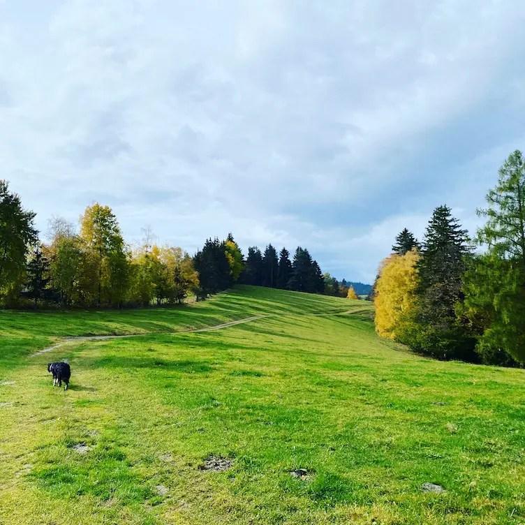 Steiermark Grenzpanoramaweg Südalpenweg 03 Wandern mit Hund weitwandern Grenze