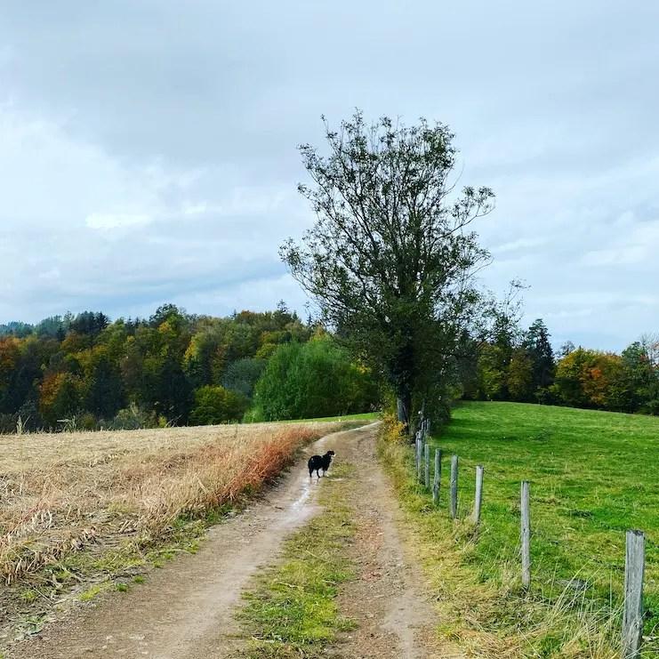 Steiermark Slowenien Grenpanoramaweg Südalpenweg Wanderung mit Hund Herbst Weitwandern