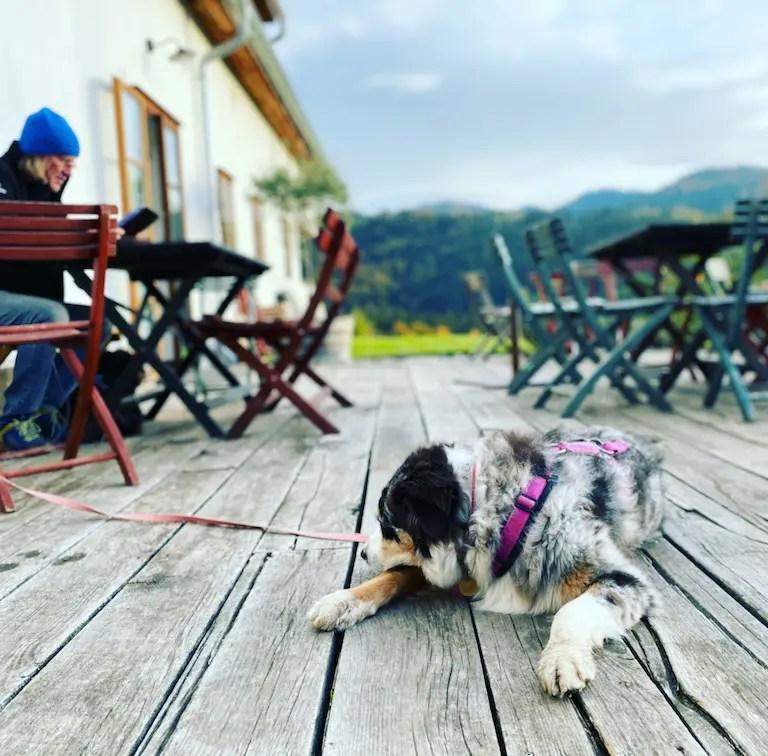 Steiermark Oberguess Winzer Weingut Buschenschank Österreich Unterwegs mit Hund Australian Shepherd