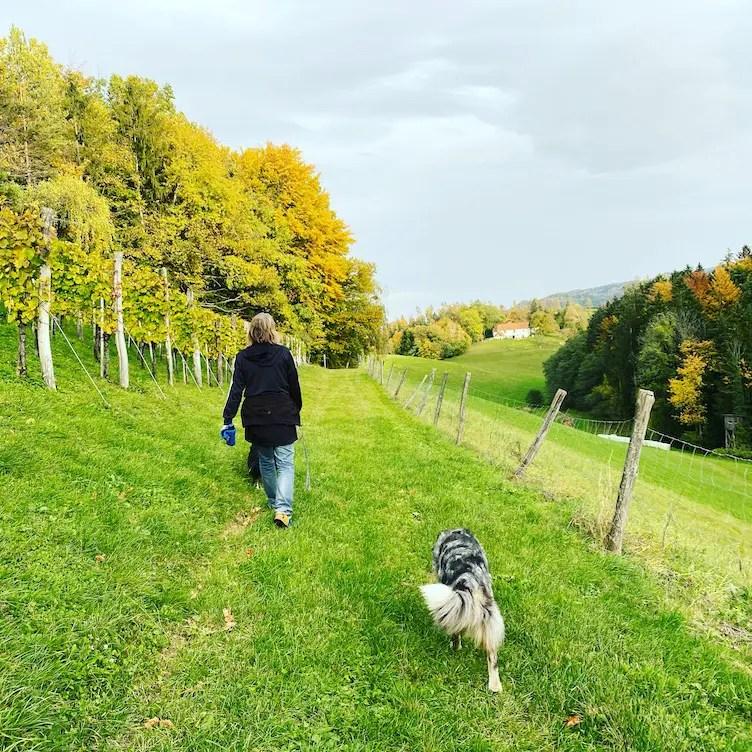 Südsteiermark Wandern mit Hund Australian Shepherd Weingarten Österreich