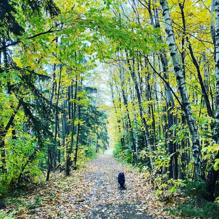 Steiermark Wandern mit Hund Grenzpanoramaweg Südalpenweg 03 Wegwandern Grenze Herbst Weinstraße