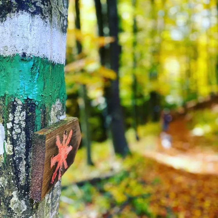 Steiermark Wandern Österreich Wanderweg