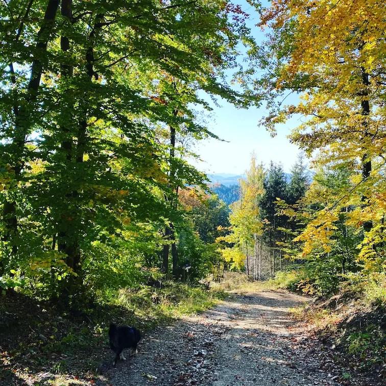 Steiermark Wald wandern mit Hund