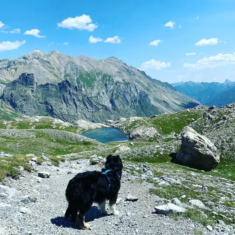 Reisen während Corona Wandern mit Hund Piemont Valle Maira Italien Alpen Australian Shepherd Dino Icardi