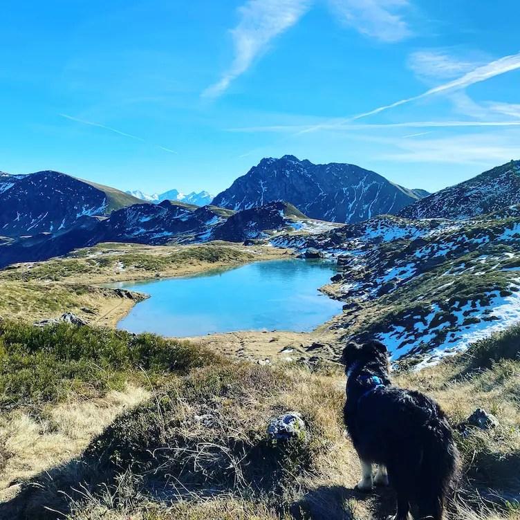 Kitzbüheler Alpen Wandern mit Hund Australian Shepherd Torsee Jochberg