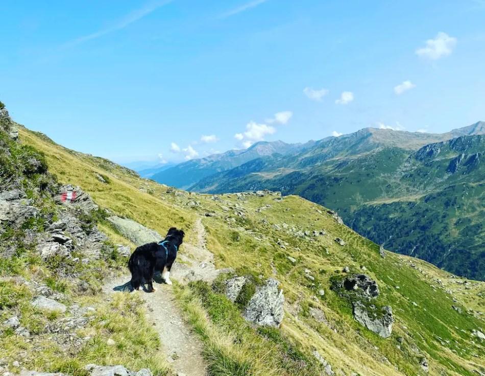 Kitzbüheler Alpen Wandern mit Hund Kelchsau Torhelm Langer Grund Brixental Australian Shepherd Tirol
