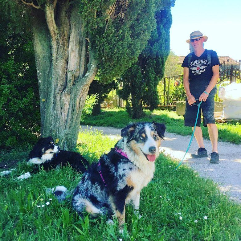 Lagune von Venedig Ausflug mit Hund Torcello Australian Shepherd