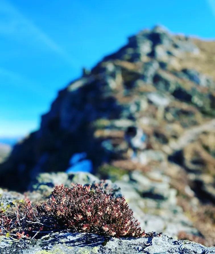 Wandern Wanderung Kitzbühel Jochberg Torsee Herbst Tirol