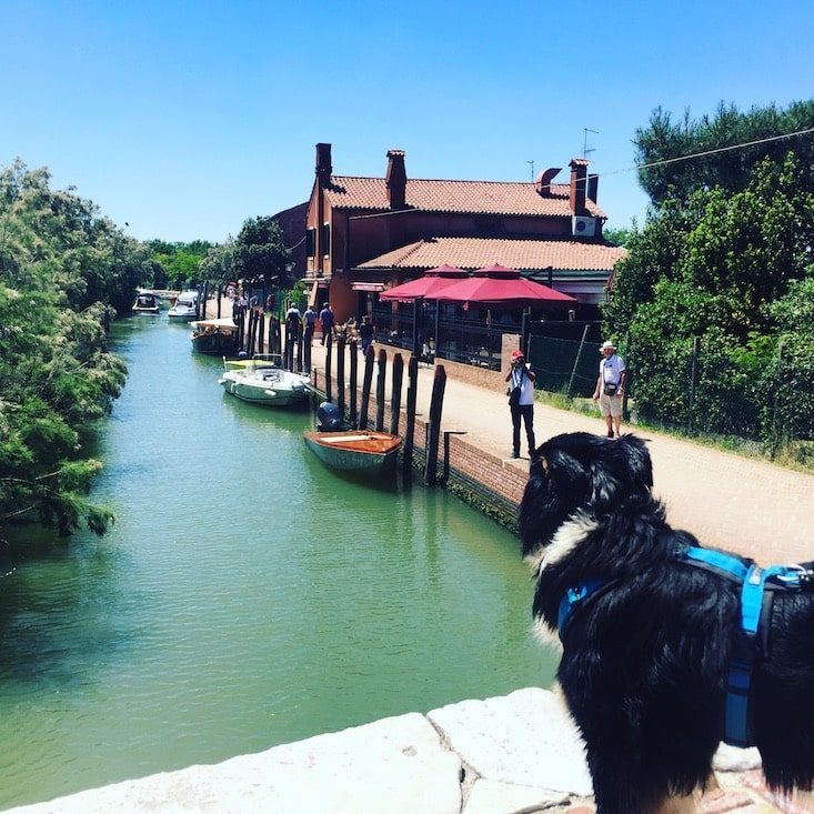 Torcello Laguneninsel Hund Venedig