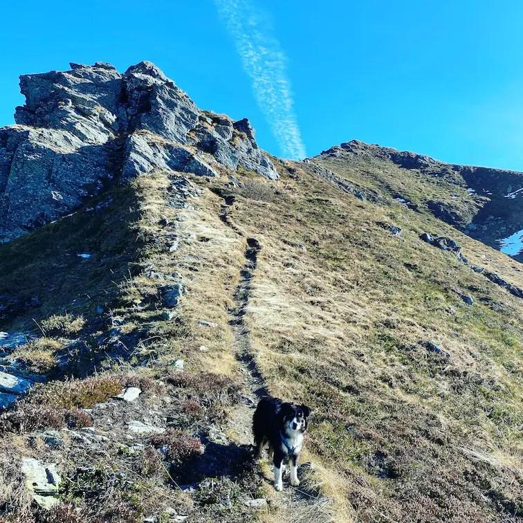 Wandern mit Hund Torsee Schützkogel Kleiner Schütz Australian Shepherd Jochberg Herbst Wanderung