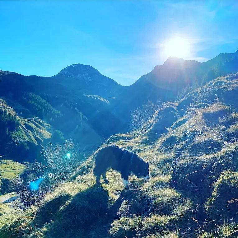 Wandern mit Hund Tirol Grasberge Herbst