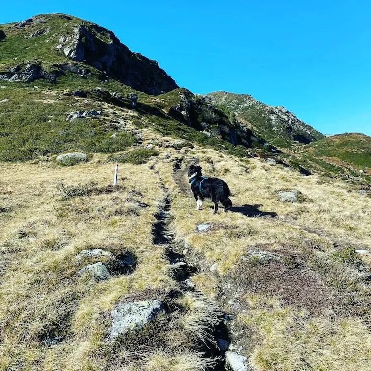 Kitzbüheler Alpen Grasberge Kurzer Grund Kelchsee Wildalmsee Wandern mit Hund Brixental Australian Shepherd Tirol