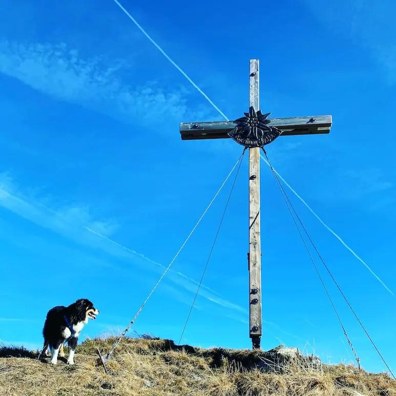 Kitzbüheler Alpen Wandern mit Hund Kleiner Schütz Grasberge Australian Shepherd Herbst Gipfelkreuz