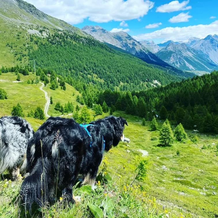 Wandern mit Hund Italien Alpen Australian Shepherd