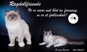 bannerRAGDOLLFRIENDS