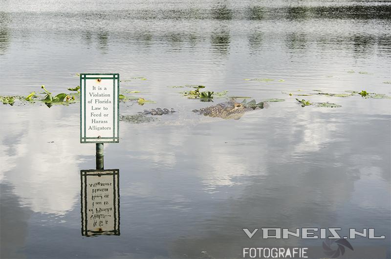 Alligators genoeg deze vakantie!